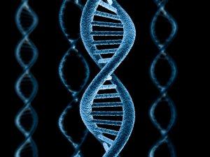 Синтез ДНК. Репликация Репликация ДНК Анимация