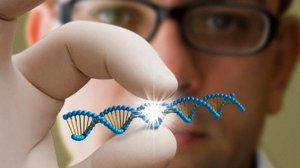 Как проводится ДНК анализ