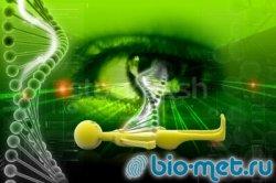 ДНК и биометрические особенности голубых глаз